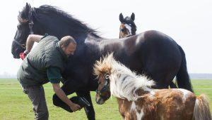 Paard DAP Skarsterlan